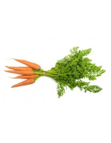 Zanahoria Bio Frutería