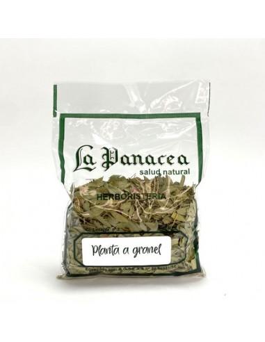Amapola planta 20g